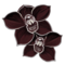 orchidee-noire_v1828806360.png
